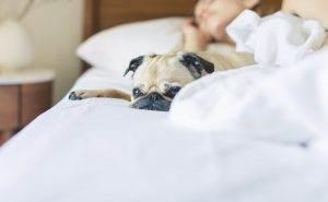 About Us - Walk My Dog Spot - Pasadena Pet Sitter