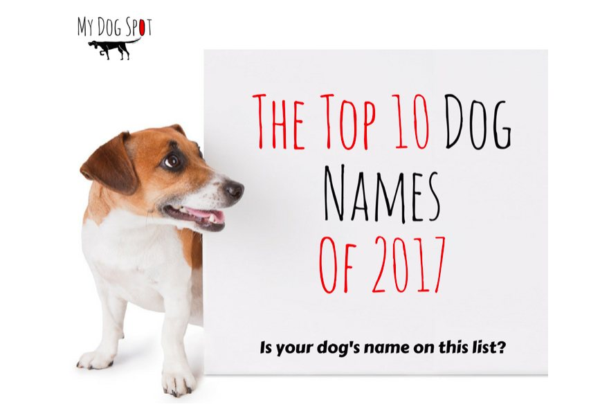 Top 10 Dog Names From 2017