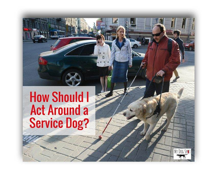 How Should I Act Around a Service Dog?