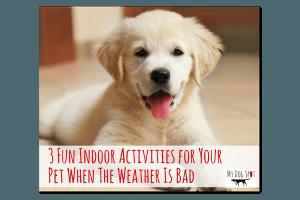 3 Fun Indoor Activities for Your Pet When the Weather is Bad