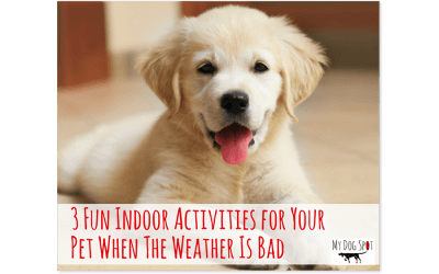 3 Fun Indoor Activities for Your Pet When the Weather is Bad