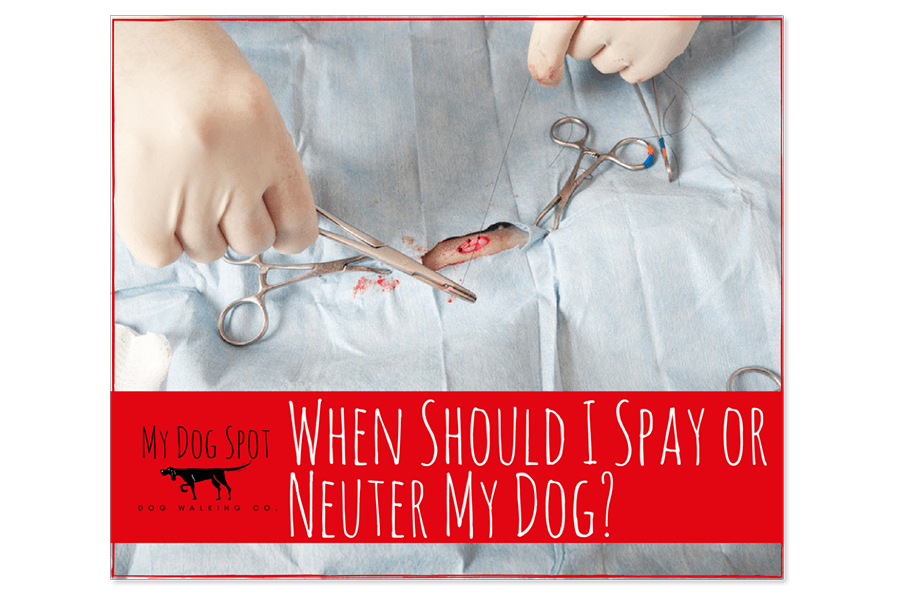 When Should I Spay or Neuter My Dog?