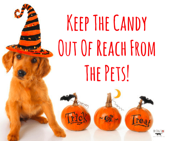 What to Do If Your Dog Eats Chocolate This Halloween
