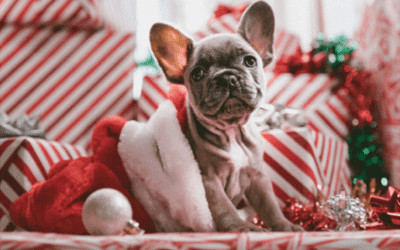 Keeping Your Dog Happy and Safe This Holiday Season