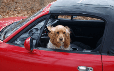 Traveling with Your Dog During the Holidays