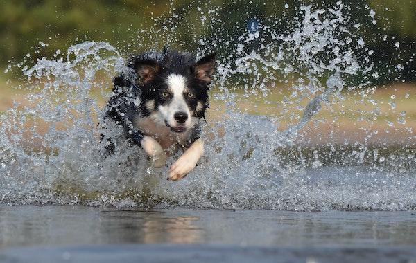 Run Spot, Run!