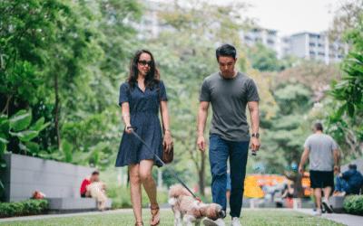 Choosing the Best Dog Walker in Los Angeles