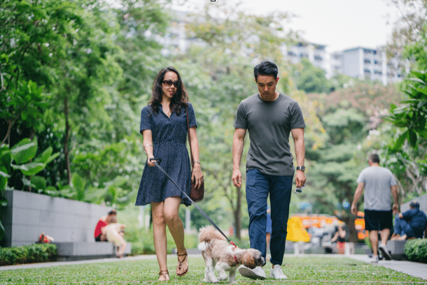 Choosing the Best Dog Walker in Los Angeles