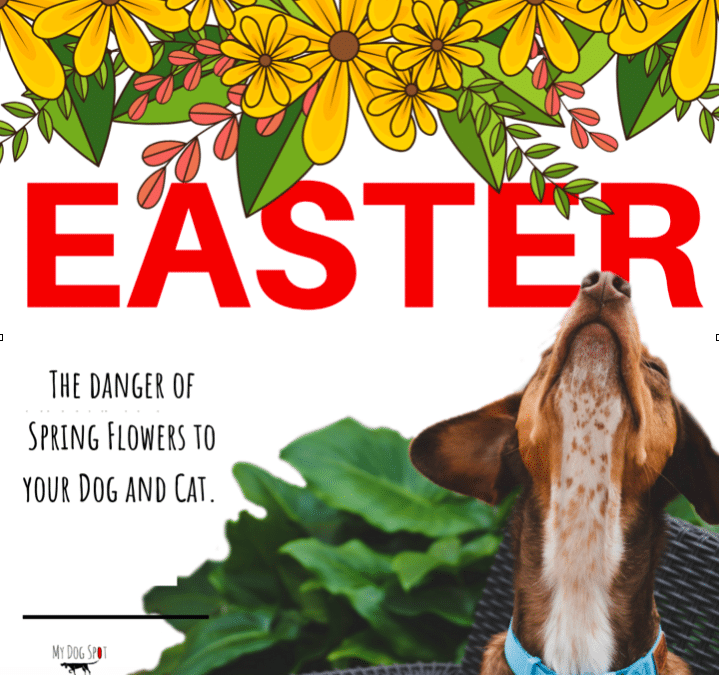 Is the Easter Lily Toxic to Pets?