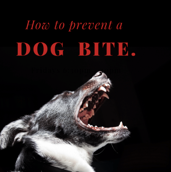 How to Prevent a Dog Bite