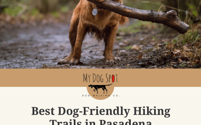Best Dog-Friendly Hiking Trails in Pasadena