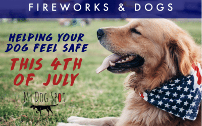 Fireworks and Dogs | Helping Your Dog Feel Safe This Fourth of July
