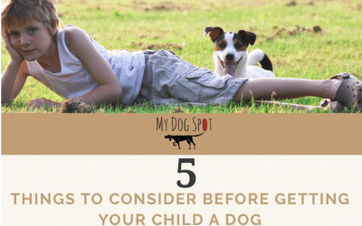 5 Things To Consider Before Getting Your Child A Dog