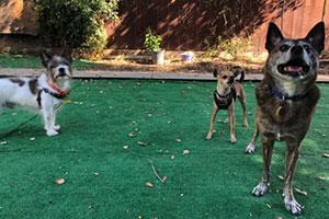 Dog Park Adventures