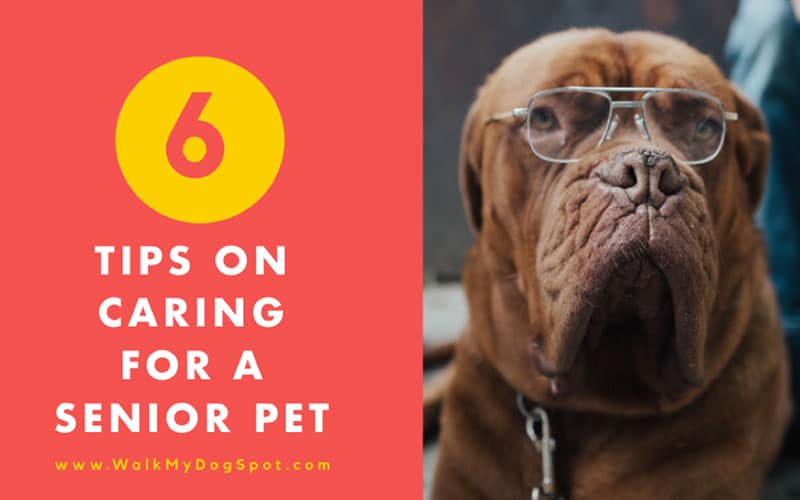 6 Tips on Caring for A Senior Pet