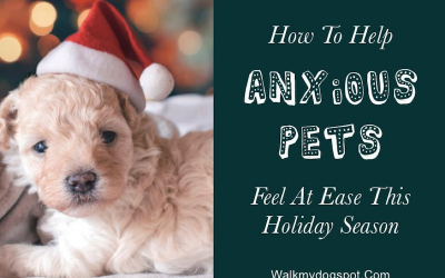 Helping Anxious Pets Feel at Ease This Holiday Season