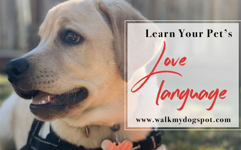 Learn Your Dogs Love Language