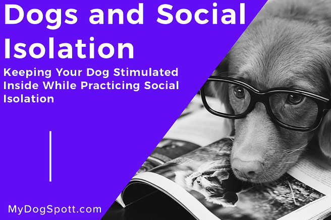 Keeping your Dog Stimulated Inside While Practicing Social Isolation