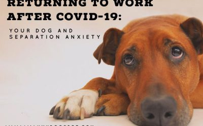 Returning to Work After Covid-19: Your Dog and Separation Anxiety