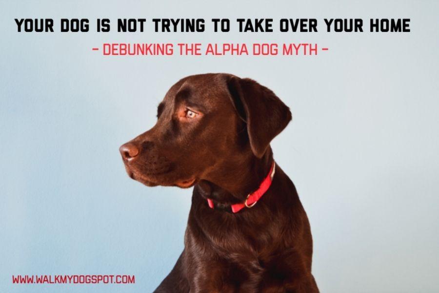 Debunking The Alpha Dog Myth