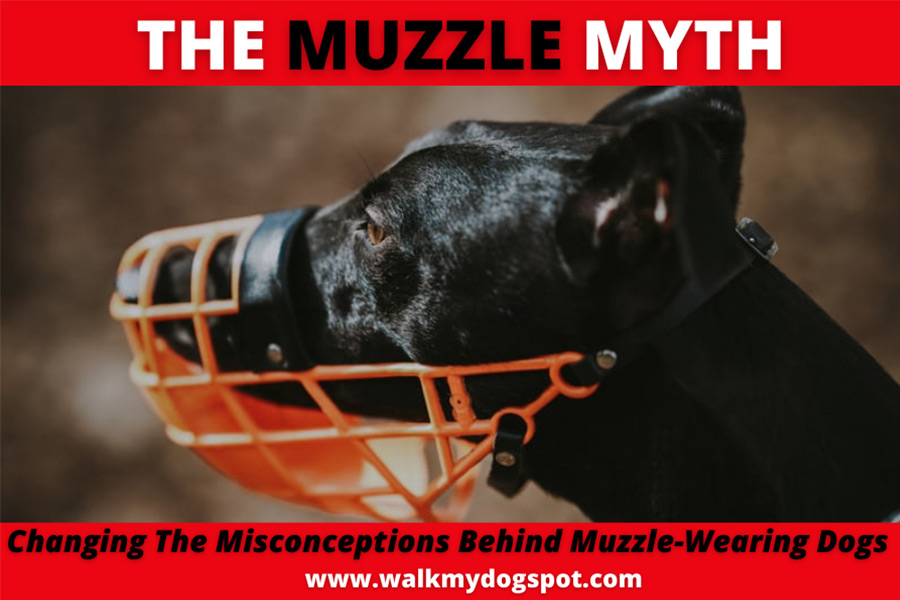 The Muzzle Myth - Changing The Mis-conceptions Behind Muzzle-Wearing Dogs